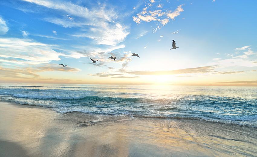 Birds flying across beach sunrise